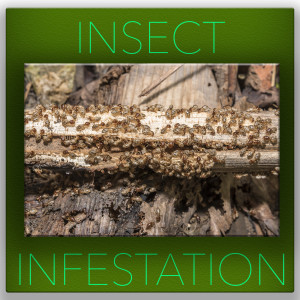 Insect infestation