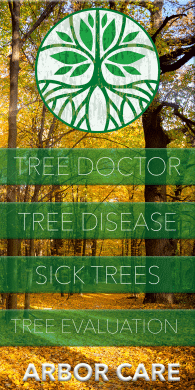 We provide certified arborist, tree treatment, tree services and more.