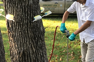 Treating trees back to good health in Fort Worth, TX.