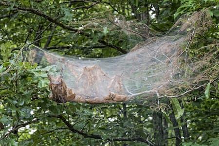 """""""Webworms"""""""