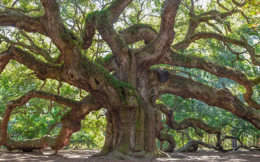 Caring For Mature Trees