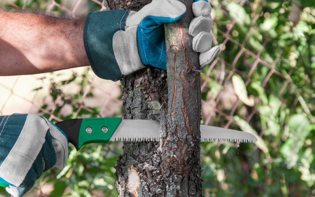 proper way to trim tree