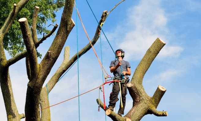 Average Cost Of Tree Removal