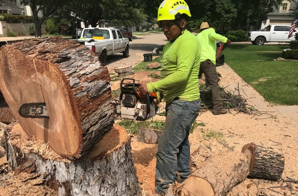 Tree Removal Service In Burleson, Texas