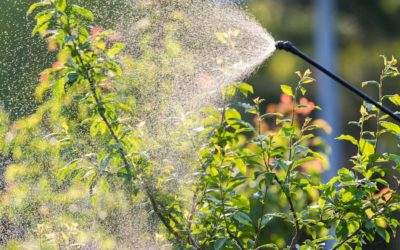 Signs Of A Sick Shrub In Grapevine, Texas
