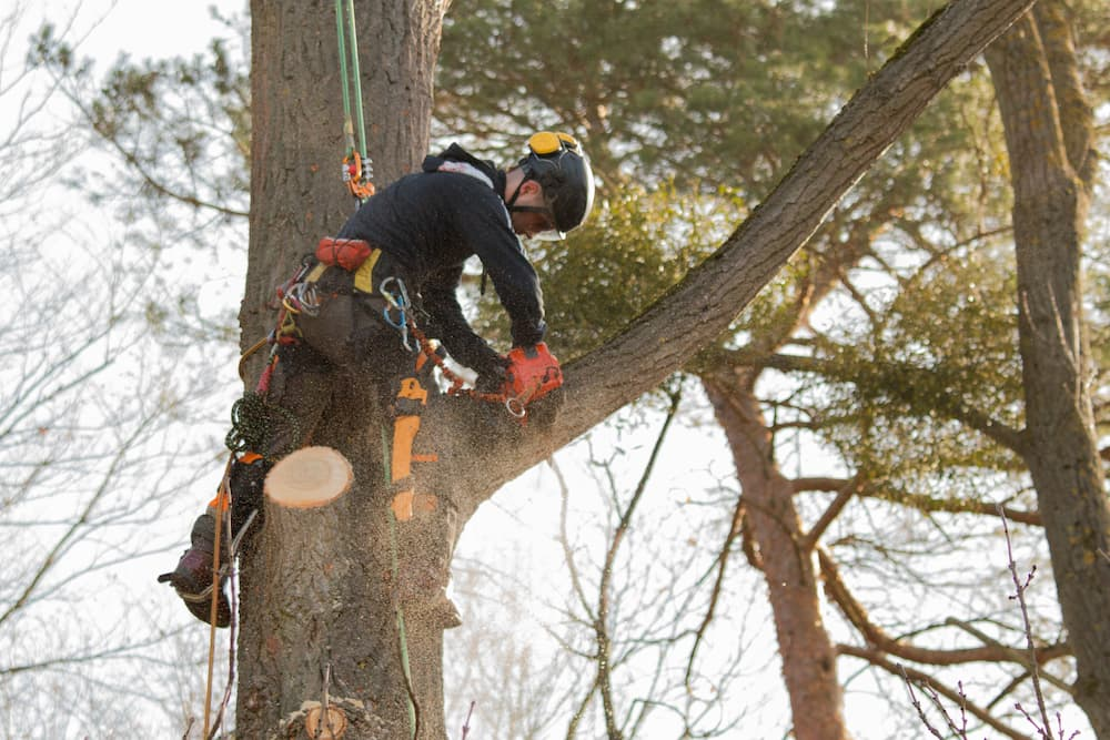 Local Tree Trimming Service