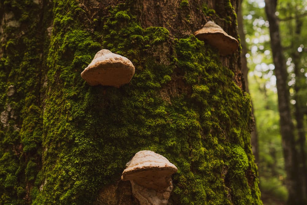 Signs Of Tree Fungus In Southlake, Texas