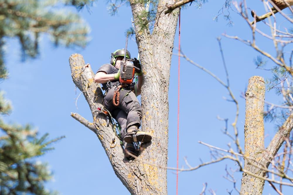 Tree Arborist