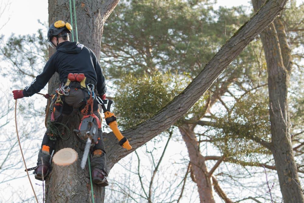 Professional Tree Service Near Me